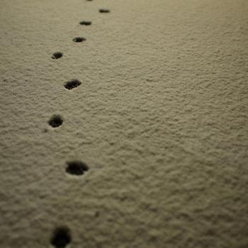 平成25年1月27日の雪 その2.jpg